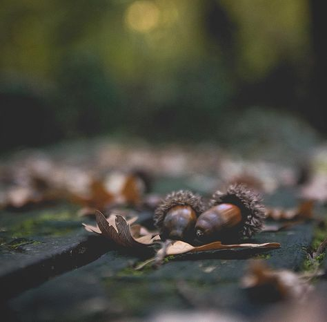 foglie Autumn details . . . . #Fall...