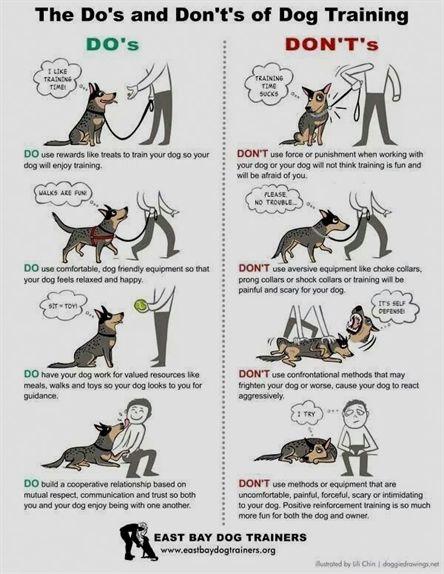 Dog Training Head Collar Dog Training Malayalam Dog Training