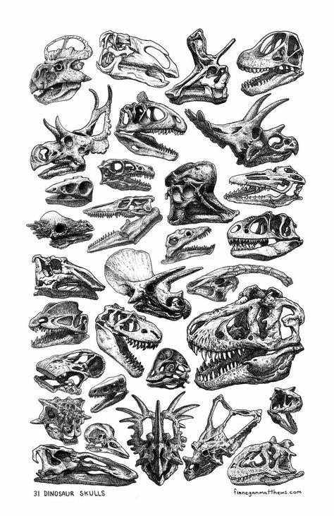 Finn Matthews Illustration We'll never be able to get enough of dinosaur skulls! Dinosaur Bones, Dinosaur Art, Dinosaur Skeleton, Dinosaur Drawing, Tatoo Crane, Symbol Tattoos, Prehistoric Creatures, Animal Skulls, Jurassic Park