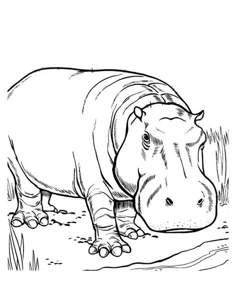 33 Hippo Coloring Pages Ideas Coloring Pages Hippo Coloring Pictures