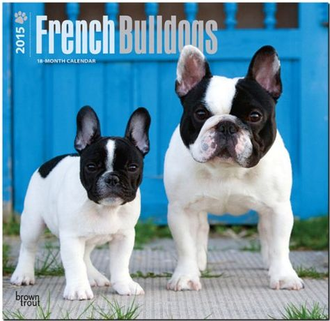 French Bulldog (Canis familiaris) adult and puppy - Mark Raycroft/Minden Picture Mais