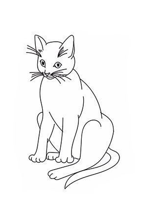 Ausmalbild Grosse Katze Zum Ausmalen Ausmalbilder Malvorlagen Katze Ausmalbilderkatze Kindergar Katze Zum Ausmalen Ausmalbilder Katzen Ausmalen