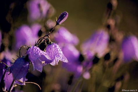 Metz, ville fleurie - photo de violettes | Pandora, Bijoux pandora ...