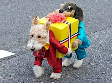 25 Creative Costumes For Dogs Pet Halloween Costumes Cute Dog