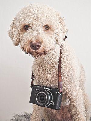 Podgi Pix Photo Portraits Von Hund Amp Pferd Situativ Aktiv Auf Turnieren Oder Veranstaltungen In Der Hundeschule Social Media We Comfortzone