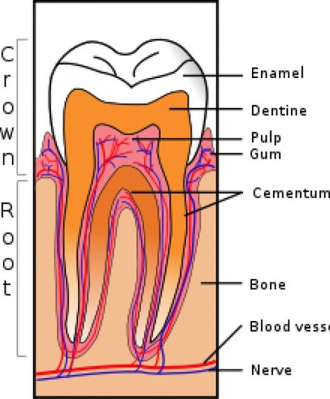 Super article on Dental Health and diet and supplements to keep teeth strong. - Oral Health Care For Good Teeth - Dental