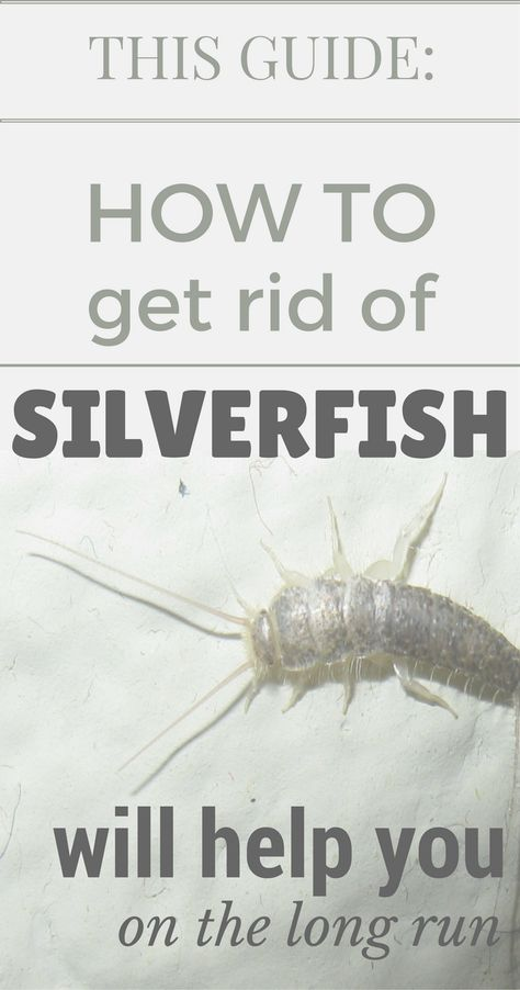 This Guide How To Get Rid Of Silverfish Will Help You On The Long Run Topcleaningtips Com Get Rid Of Silverfish Silverfish How To Run Longer