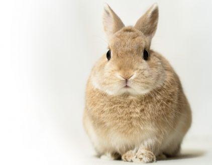 ウサギを放し飼いで室内でしてますが飼育の仕方的に大丈夫でしょうか 厳選 人気のq Aまとめ うさぎ ペット うさぎ ケージ ウサギ のケージ