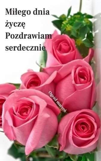 Pin By Wanda Swoboda On Dzien Dobry Plants Rose Flowers