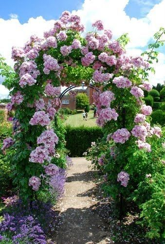 Great Gardens Pretty pink roses climbing white fence Rose arch in Faversham ~ Kent, England