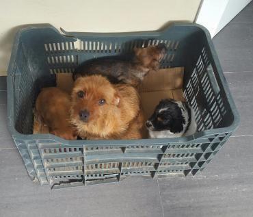 Hund Mix Mischling Hundin 2 Jahre Spanien Haustier Hunde Tierheim