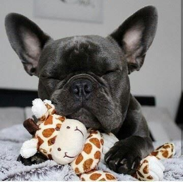 Minipet Online Pet Boutique Is A Melbourne Based For