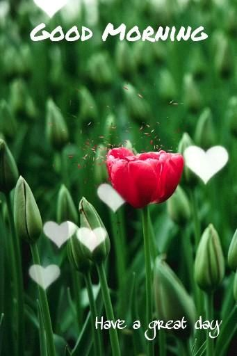 Visit us.... to get 100+ Flower Good Morning Photo, Good Morning Flower, Natural Good Morning #GoodMorning #GoodMorningImages #Morning #Flowers #Images