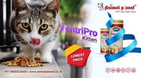 Grab The Best Deals On Pet Food Supplements And Accessories Exclusively Only For You From The Nearest Pet Store In S Pet Store Cat Accessories Pet Food Store