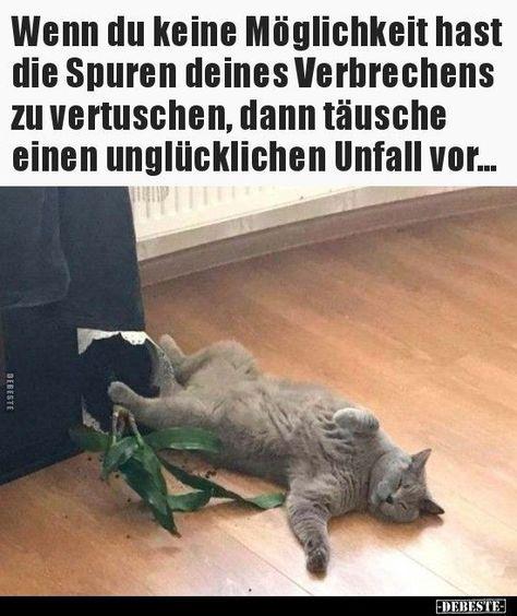 (notitle) - Sprüche, Witze, Bilder, Infos, Memes, Videos... - #Bilder #Infos #Memes #notitle #Sprüche #Videos #Witze