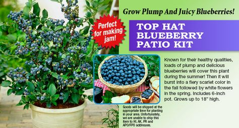 Attractive TOP HAT BLUEBERRY PATIO KIT. Have Some Kits For You To At Berries; U0026 Some  For Birds To Eat Berries. | Pinterest