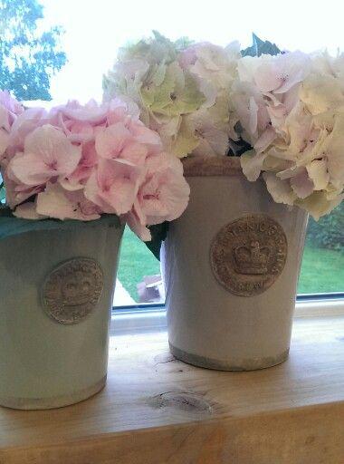 Hydrangea in kew gardens plant pots brick dust glitter plant hydrangea in kew gardens plant pots brick dust glitter plant pots pinterest kew gardens hydrangea and plants workwithnaturefo