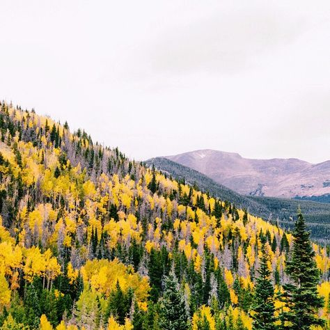 """We asked @hunter_lawrence what sight meant to him. His answer... """"I'm thankful for the ability to see the seasons change. This time of year miles of forest look just like this across the Rocky Mountains...it's absolutely stunning. I recently read a statistic that 285 million people are blind or visually impaired and miss getting to see something this beautiful and this clear...80% don't have to."""" #givesight"""