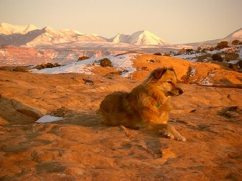 Dog Friendly Hiking In Moab Utah Pinterest