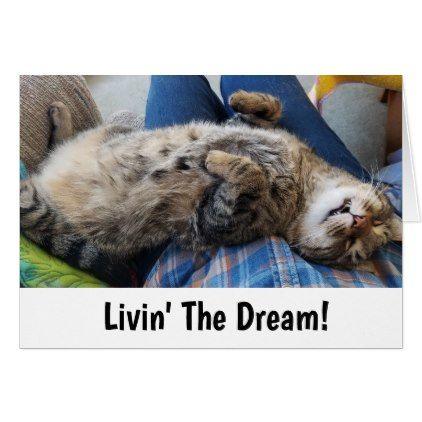 Sleeping Tabby Cat Humor Zazzle Com Tabby Cat Funny Cats Cats