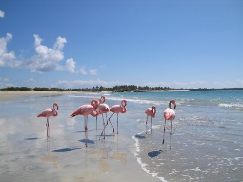 Isla Isabela Galapagos Galapagos Places To Go Island