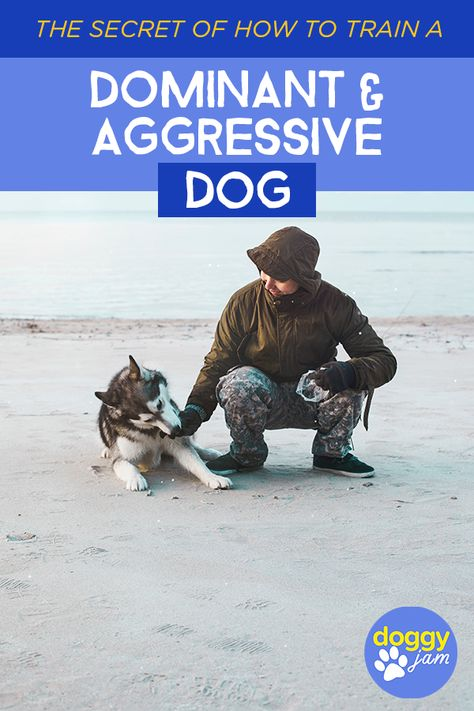 The Secret Of How To Train A Dominant And Aggressive Dog