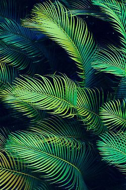 Palm fronds. So many shades of green. #officetrends #inspiration #photography