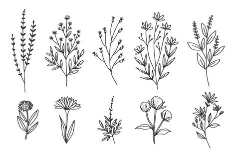 Hand-draw with herb and flowers collecti... | Free Vector #Freepik #freevector #vintage #floral #flower #hand