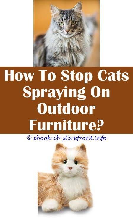 cat deterrent spray petsmart