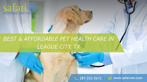 Are You Looking For An Affordable And Best Pet Health Care Come To Safarivet Local And Emergency Veterinary Clinic In L Pet Health Care Dog Clinic Pet Health
