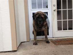Dog Doors For Large Giant Breeds Dog Door Large Dog Door Secure Dog Door