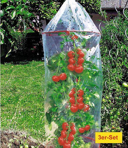 Dinies Deko Gartenartikel Tomaten Reifehaube 3er Set 1 Pack Tomaten Pflanzen Tomatenhaus Selber Bauen Tomaten Garten