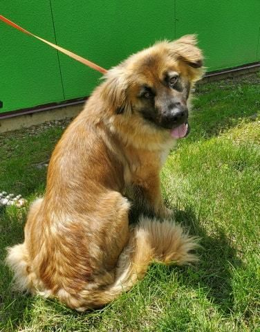 Adopt Leona On Petfinder Shepherd Mix Dog Pet Search Help
