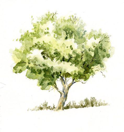 Watercolor Tree Sketch Arbres En Aquarelle Peinture Arbre