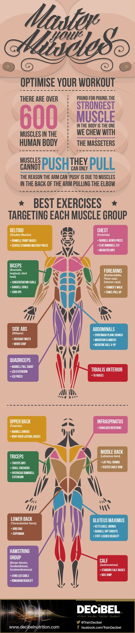 Master Your Muscles: Best Exercises For Each Muscle Group #Infographic