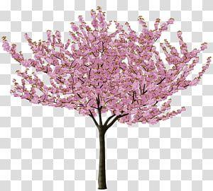 Pink Sakura Tree Art Cherry Blossom Tree Flower Cherry Blossom Transparent Background Png Clipart Cherry Blossom Drawing Tree Art Cherry Blossom Watercolor