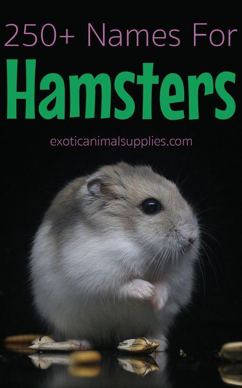 250 Hamster Names For Male Female Hamsters Hamster Names