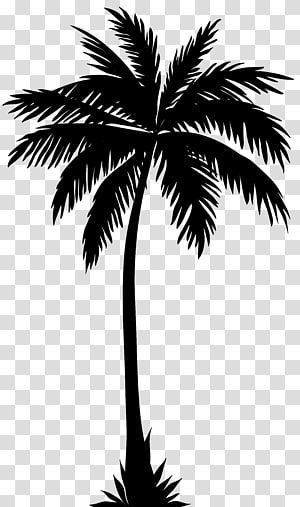 Palm Tree Illustration Arecaceae Silhouette Tree Palm Tree Transparent Background Png Clipart Palm Tree Drawing Palm Tree Clip Art Tree Illustration