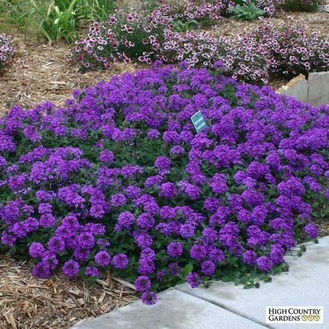 55 Best Plants I Have In My Alabama Garden Images Plants Garden
