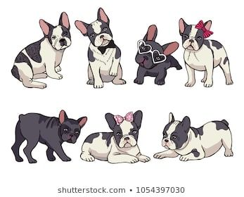 Illustrations Set Of Cute Little French Bulldog Funny Pictures Of