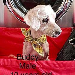 Los Angeles Ca Dachshund Meet Utah Drut Buddy A Pet For