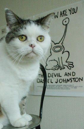 まことダニエル・ジョンストン : まこという名の不思議顔の猫