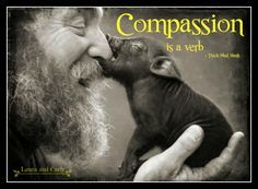 Compassion is a verb #compassion  #animals #ThíchNhấtHạnh