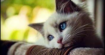Gambar Kucing Dan Tulisan Lucu Di 2020 Dengan Gambar Kucing