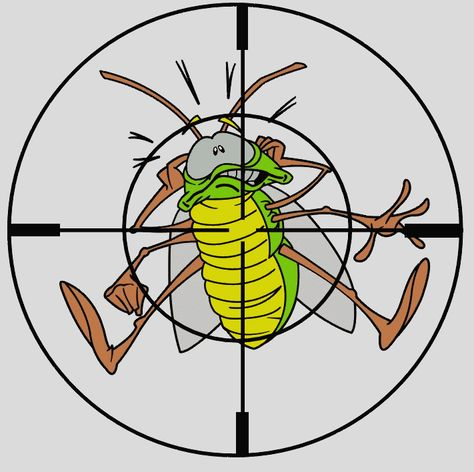 Adecuamos Los Tratamientos A Sus Necesidades Pest Control Diy Pest Control Best Pest Control