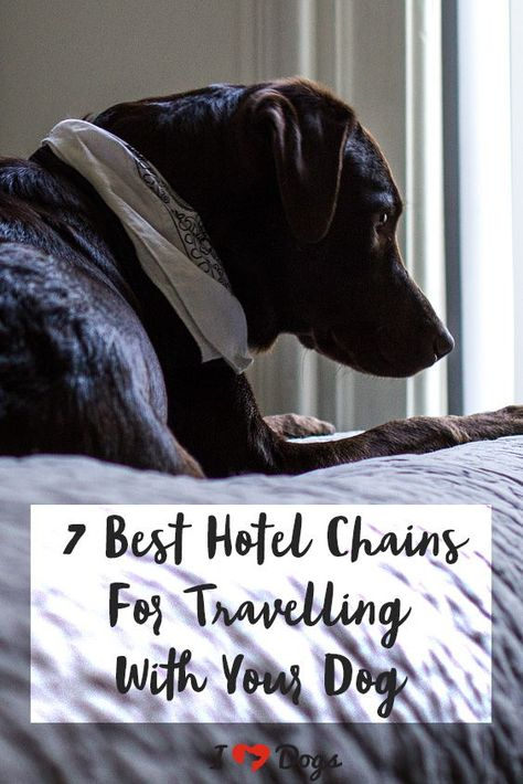 The 7 Best Hotel Chains For Traveling With Your Dog Hotels That Allow Dogs Dogs Dog Friendly Hotels