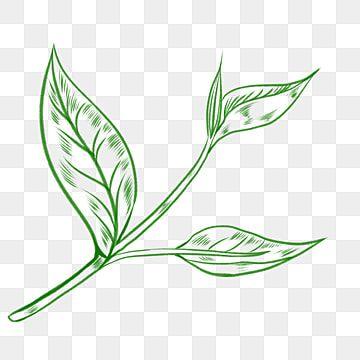 Desenho De Folhas De Cha Verde Desenho De Linha Cerimonia Do Cha Cha Imagem Png E Psd Para Download Gratuito In 2021 Tea Leaves Illustration Leaf Illustration Leaves Illustration