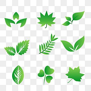 Download The Leave Set Vector Santai Leave Bunga Png And Vector With Transparent Background For Free Download Vintage Ribbon Banner Vector Icon Design Free Vector Graphics