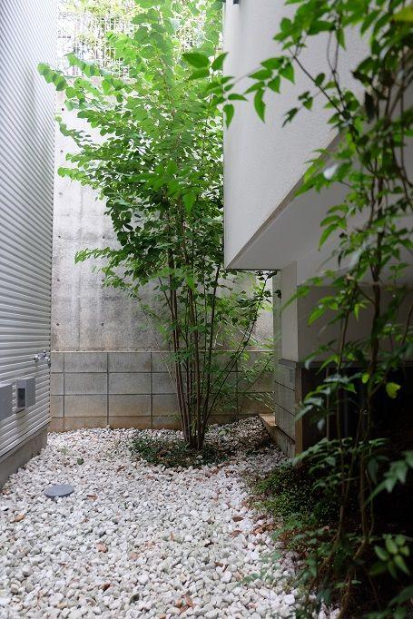 シンボルツリー 爽やかな桂 カツラ 建築家との家作り 駐車場の