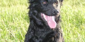 Todas Las Razas De Perros Nombres Fotos Y Características Razas De Perros Razas De Perros Inteligentes Razas De Perros Españoles